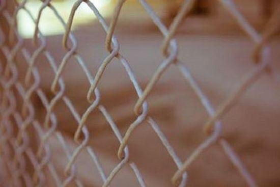 Plasa sarma impletita 2.8 mm, 1.5 x 10 m pentru garduri